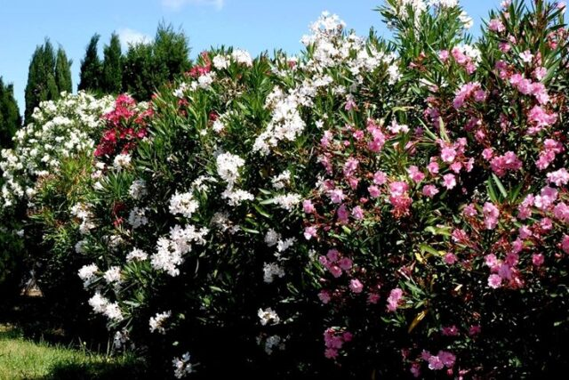 Volontariato: 200 alberi piantati nel territorio